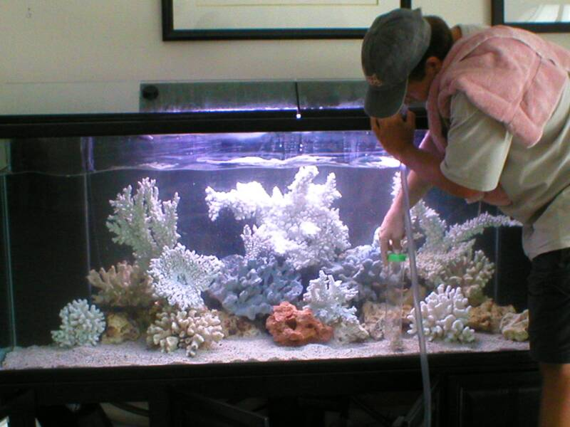 aquarium cleaning
