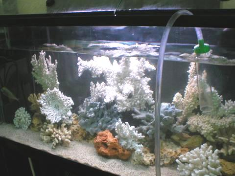 Water change