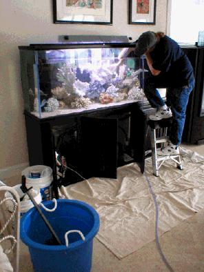 fish tank maintenance service easily 2017 fish tank