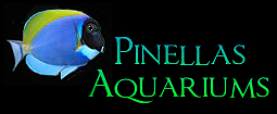 Welcome to Pinellas Aquariums featuring Titan Aquariums - Acrylic Aquariums Shipped Nationwide!